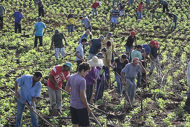 """Plano Safraconsidera """"pequenos""""os produtores com renda anual de até R$ 415 mil"""