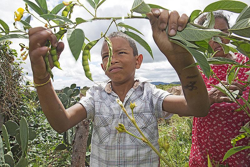 Um dos maiores desafios no atual contexto político é garantir as condições para que os agricultores e agricultoras possam produzir