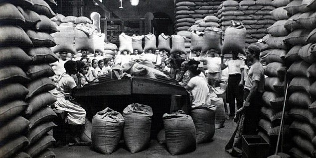 Catadeiras de café nos armazéns da Cia. Docas, em Santos, no começo do século 20