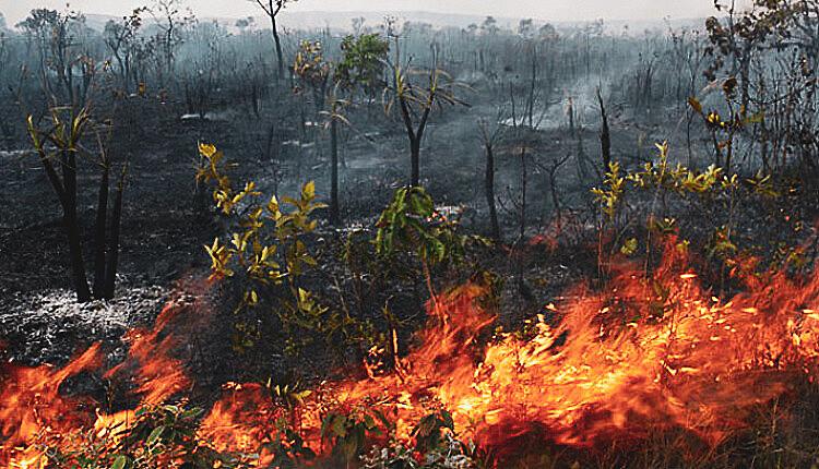 Com a chegada do verão amazônico, a floresta seca e fica suscetível a incêndios, o principal método de derrubada
