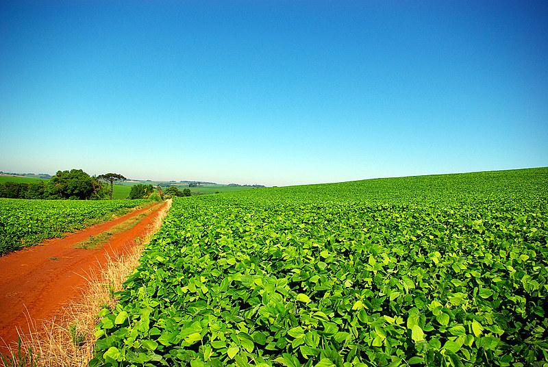 Após 1989, sucederam-se as diversas vendas de terras a estrangeiros sem registro oficial