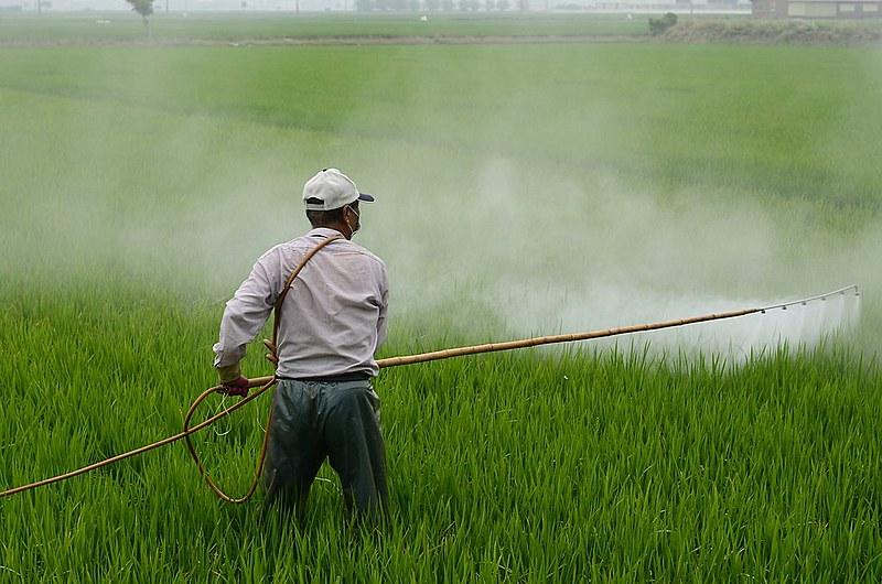 Enquanto ministros e cientistas dizem que glifosato é menos tóxico que cafeína, processos colocam em cheque as mentiras da Monsanto.