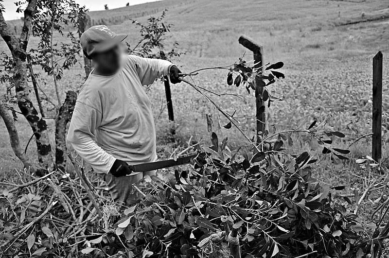 Livro lançado em 2012 expõe a situação de trabalhadores em condições análogas à escravidão no corte da erva-mate