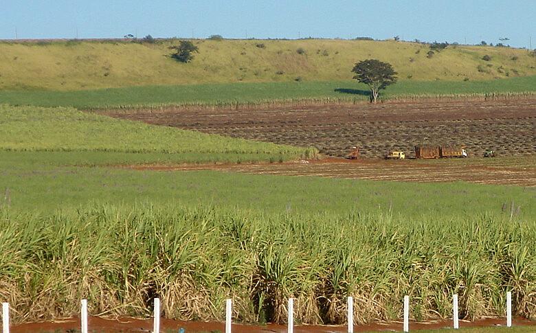Latifúndio de cana de açúcar no estado de São Paulo
