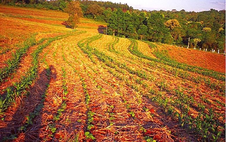Propriedade familiar em Santa Catarina corrigiu o solo, acabou com a erosão e hoje produz mais e melhor com técnicas agroecológicas