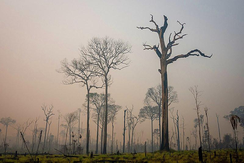 Ex-presidente do Inpe afirma que soberania brasileira sobre a Amazônia está sendo desrespeitada pelo próprio governo