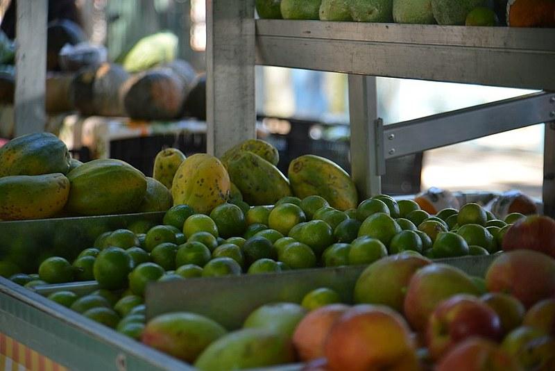 Além de legumes, frutas e hortaliças, refeições já prontas, como arroz e feijão, podem ser congeladas