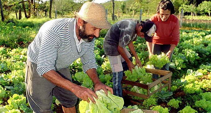 Este martes se publicó en el Boletín Oficial una resolución que define la eliminación oficial de la Secretaría de Agricultura Familiar.