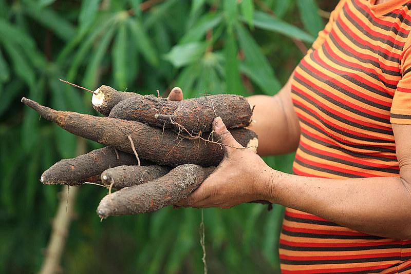 MST dá suporte à recuperação do Haiti com produção de alimentos orgânicos