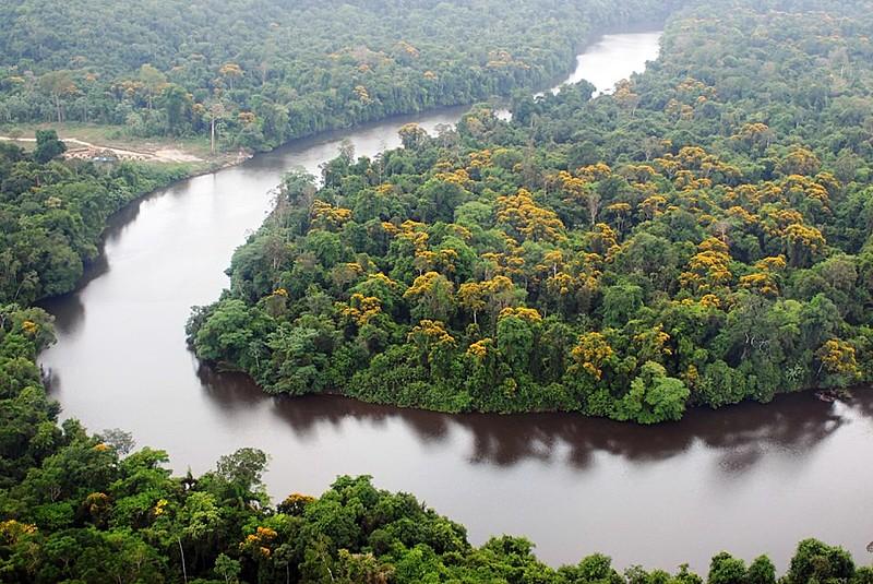 Bolsonaro apresenta uma ideia retrógrada e atrasada sobre a maior floresta tropical do mundo