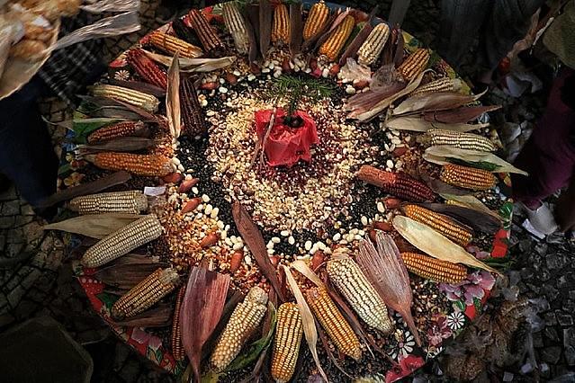 Dezenas de variedades de semente crioulas de milho compartilhas durante encontro de guardiãs e guardiões.