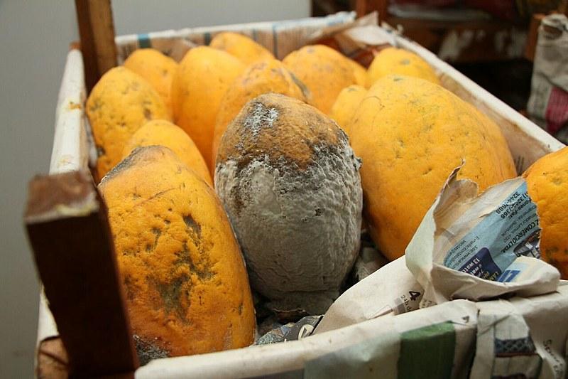 Frutas que nunca foram servidas aos alunos apodrecem em depósito da escola