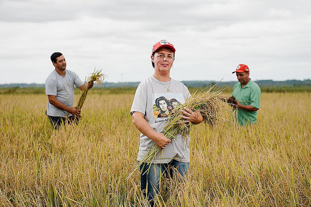 arroz agroecológico mst rio grande do suk