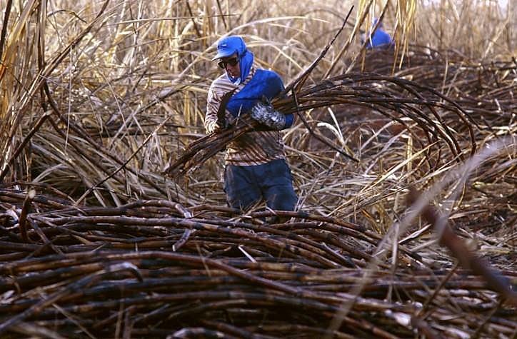 A produção de cana-de-açúcar é uma das atividades agrícolas que mais utiliza insumos