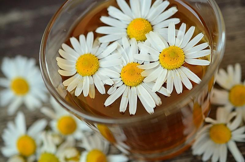 Chá de camomila é um dos meios mais comuns de consumo da planta