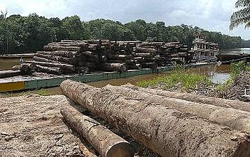 Relatório da WWF revela que, nos últimos 50 anos, desmatamento reduziu em 20% floresta amazônica