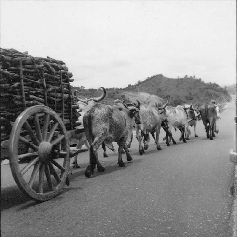 A lenha era comprada por metro cúbico, vinha em carros de boi ou, às vezes, em caminhões.