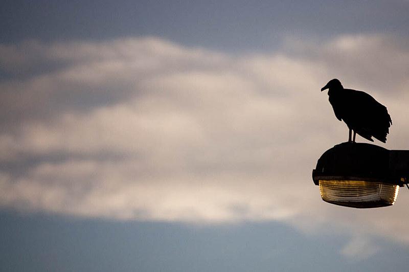 O golpe do condor não precisaria de turistas e marinheiros estrangeiros para vingar, poderia ser feito pelo Facebook e Whatsapp