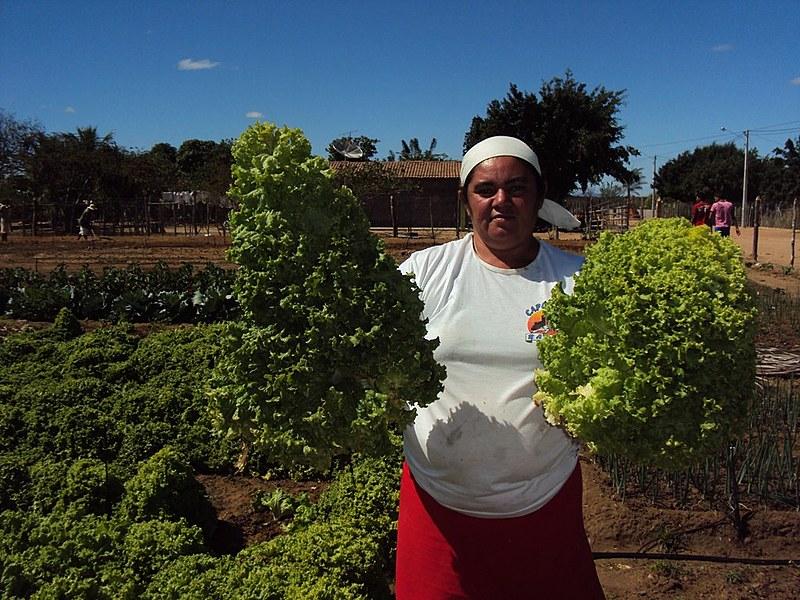 Durante o ano são colhidas seis toneladas de frutas e hortaliças que são comercializadas em comércios na região.