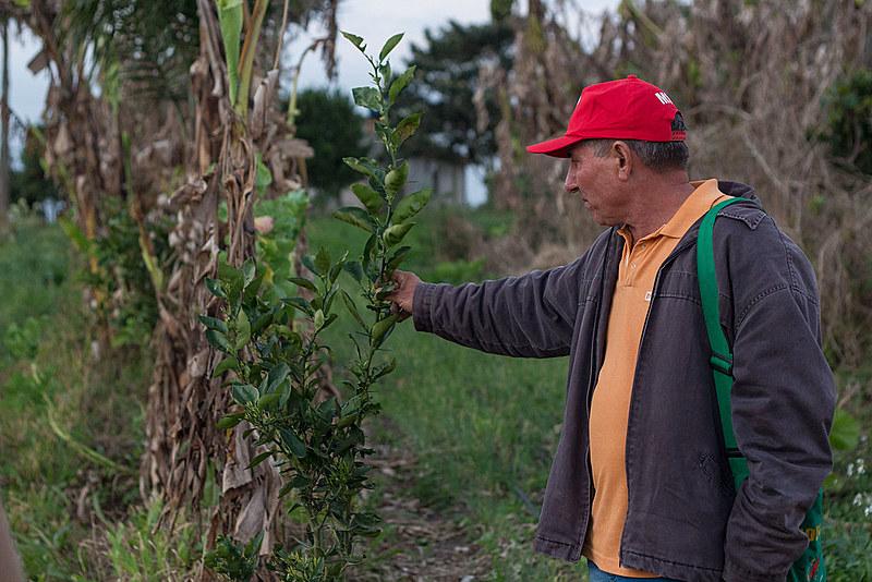 Hoje, 84 famílias do Contestado possuem hortas orgânicas certificadas.