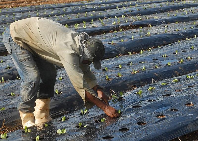 Agricultura orgânica é fonte de renda para trabalhadores em Seropédica (RJ)