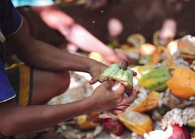 A Cargill, principal fornecedora de cacau para a fabricação de chocolates Nestlé, é financiadora de trabalho infantil e escravo nesta cadeia