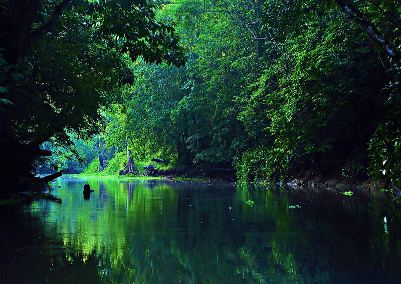 A Amazônia é compartilhada por nove países, entre eles, Brasil, Bolívia, Colômbia e Equador.