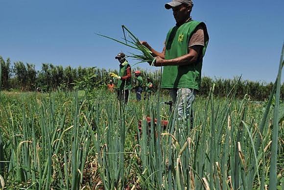 Quase 2.800 famílias são cadastradas no Ministério da Agricultura, Pecuária e Abastecimento e entregam comida agroecológica e orgânica ao PNAE