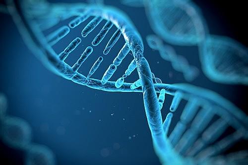 """Los """"impulsores genéticos"""" o gene drives en inglés, se basan en una tecnología tan nueva que aún no existe traducción acordada."""