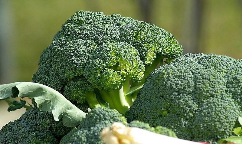 Os brócolis são alimentos muito perecíveis, devem ser guardados em sacos plásticos e mantidos sob refrigeração por no máximo uma semana.