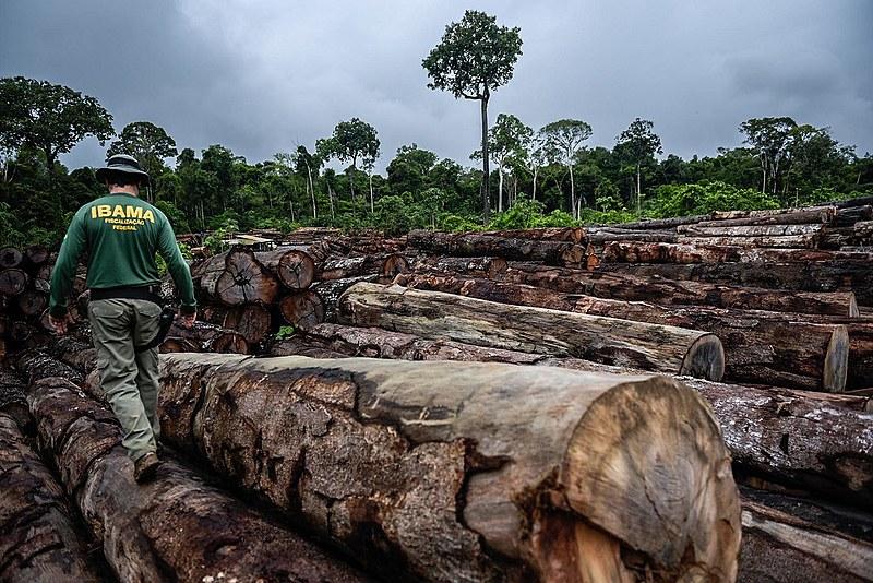 Fiscal do Ibama durante operação contra extração ilegal de madeira em terra indígena