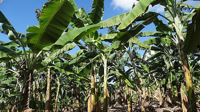 Um dos aliados de Bolsonaro foi condenado criminalmente por plantar bananas na Caverna do Diabo