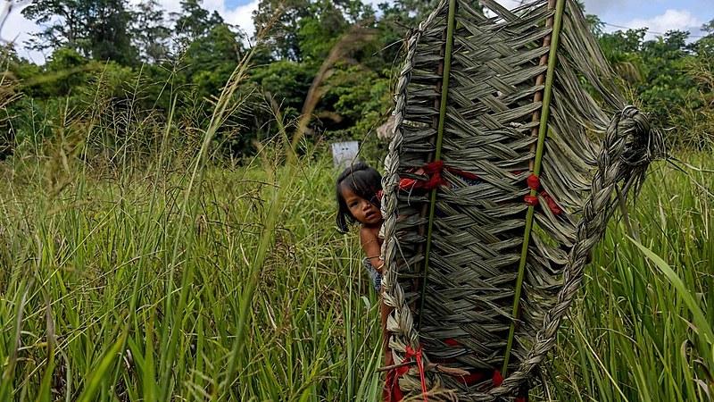 """""""A grande defesa da Amazônia se fará, principalmente pelos povos indígenas"""", diz ex-presidente da Funai"""