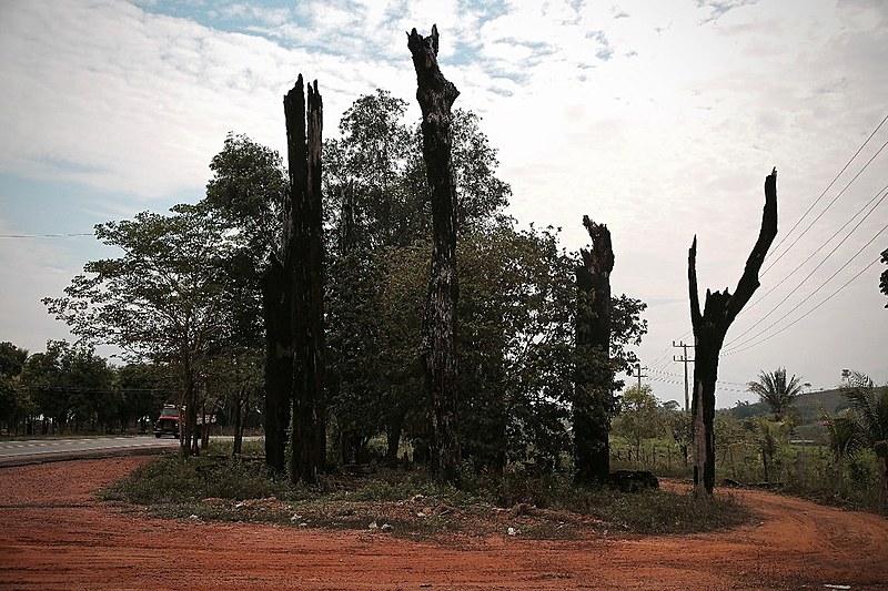 """""""As Castanheiras de Eldorado dos Carajás"""" – monumento remete ao assassinato de 21 trabalhadores rurais sem terra em 1996"""