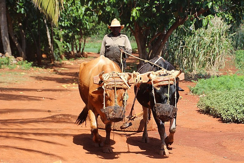 Agricultor em Cuba