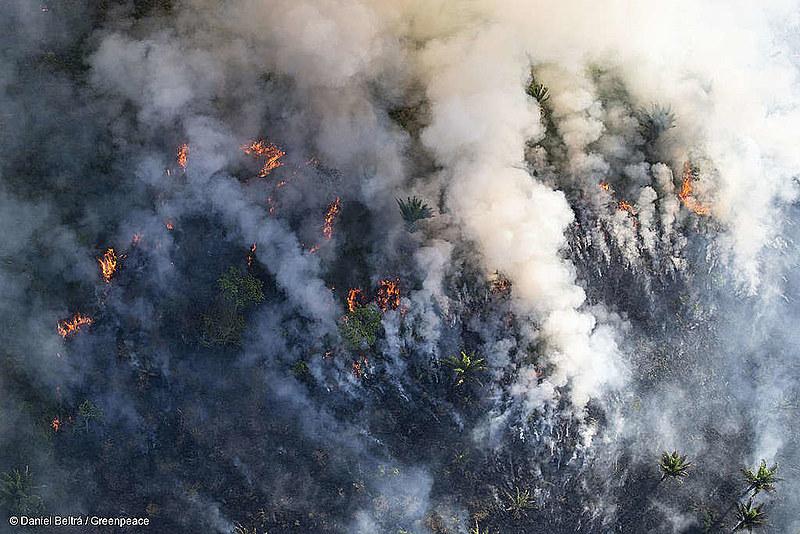 """Con la llegada del llamado """"verano amazónico"""", la selva se queda más susceptible a incendios"""