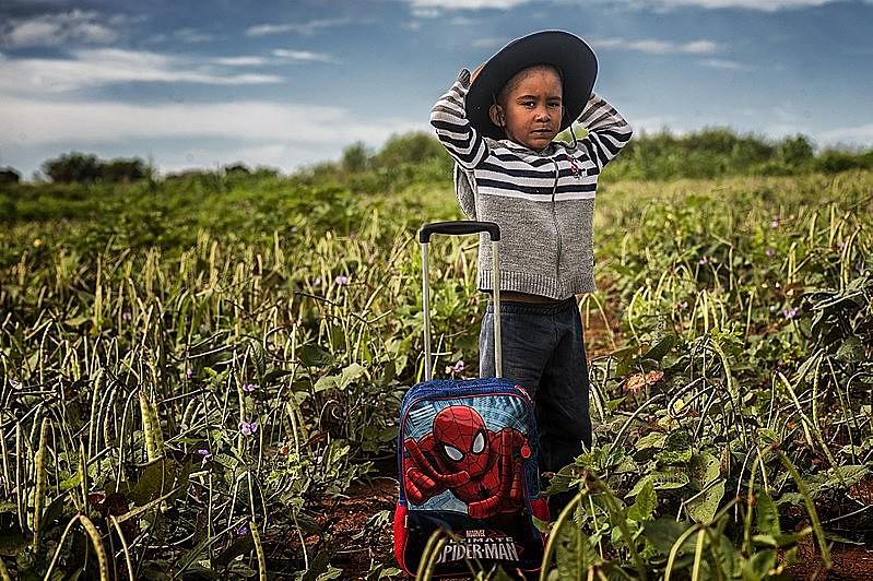 Cerca de 70% dos alimentos na mesa do brasileiro vêm da agricultura familiar, financiada em grande medida pelo Banco do Brasil