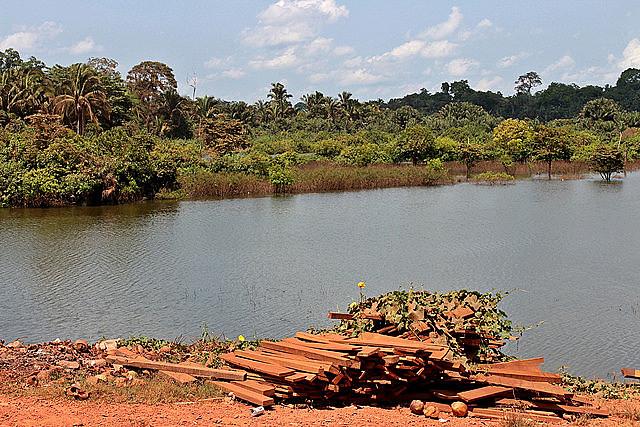 Especies nativas en la ribera del río Pucuruí evidencian la contribución de los Parakanã a la protección de la Amazonia