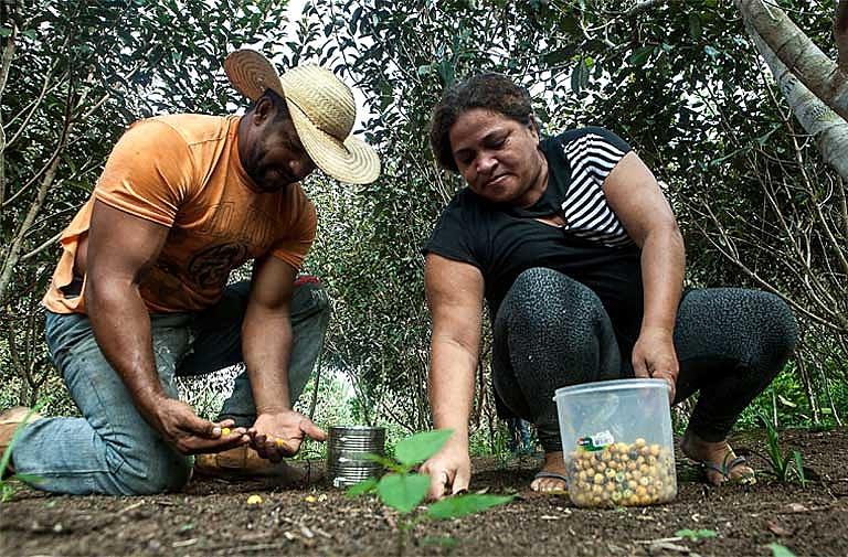 O casal Osvalinda e Daniel Pereira promovem o fortalecimento na agricultura familiar e a valorização da floresta em pé no assentamento