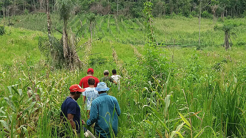 A expectativa é alcançar o volume de 7 toneladas de arroz neste ano