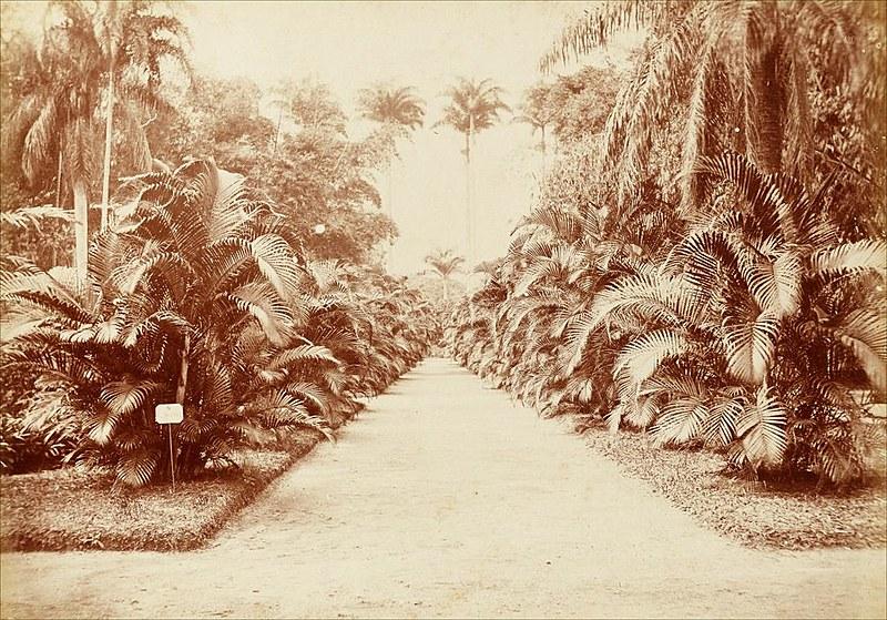 O Jardim Botânico do Riode Janeirofoi o primeiro do Brasil, aberto em 1808, com a chegada de d.João VI; registro é da década de 1890