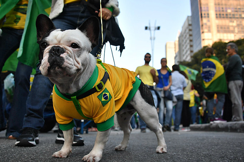 Cachorro vestido com camisa do Brasil durante manifestações de apoio ao governo Jair Bolsonaro (PSL) neste domingo (26) em São Paulo