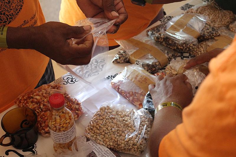 Trabalho de resgate de sementes crioulas começou a partir do programa Sementes do Semiárido