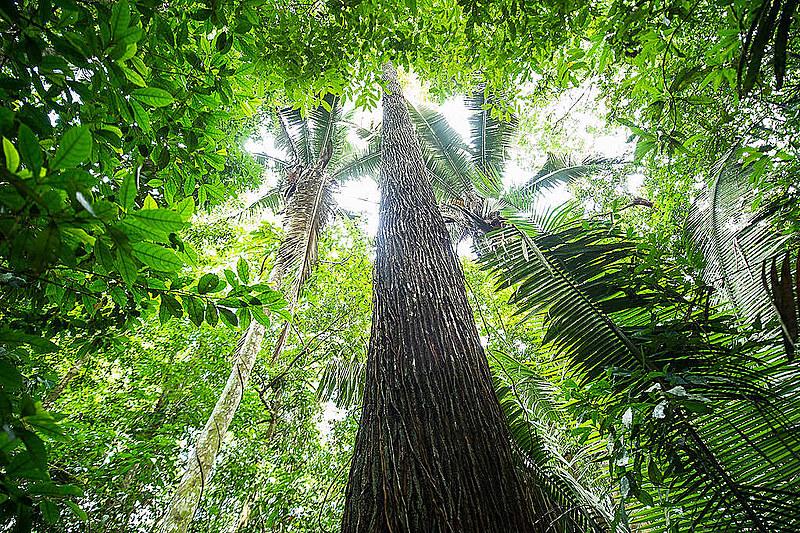 Bolsonaro editou decreto para criar marco legal que permitirá venda simbólica das florestas a países ricos emissores de gases poluentes