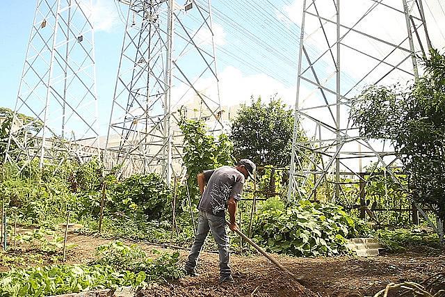 Nas hortas comunitárias de São Bernardo do Campo, trabalhador tem incremento de renda e ajuda a recuperar a biodiversidade do local