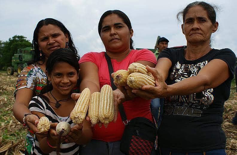 Comuna El Maizal tem centenas de hectares cultivados