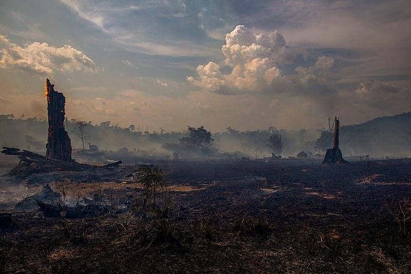 Área devastada em agosto por incêndio na região de Altamira, Pará. No mês passado, queimadas aumentaram 300% com relação a 2018