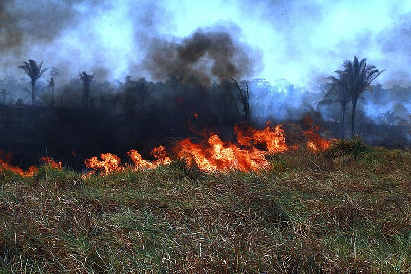 O Brasil desmatou em média 20% da Floresta Amazônica. Especialistas afirmam que esse é um percentual irreversível.