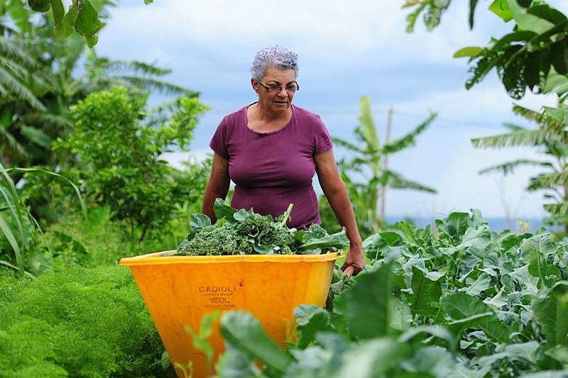 Agricultora no Distrito Federal