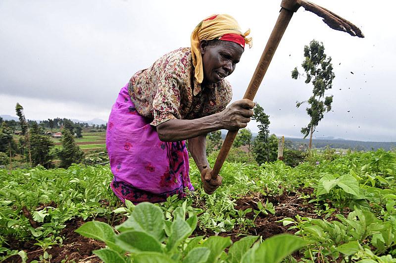Professora ganense comenta papel fundamental das mulheres no campo; Na foto, uma tabalhadora rural no Kênia.